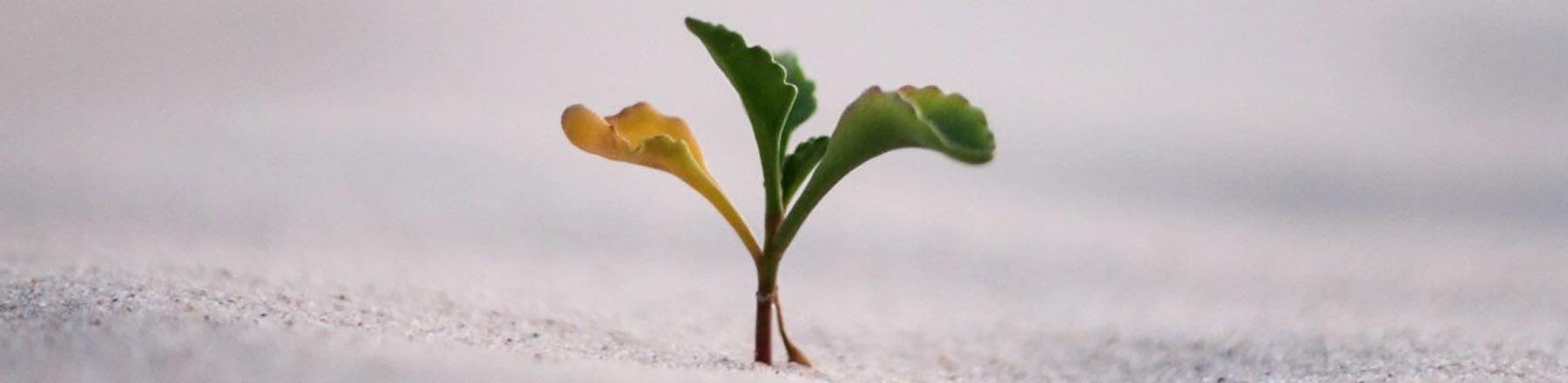 رشد کسب و کار شما با پیام انتظار اختصاصی